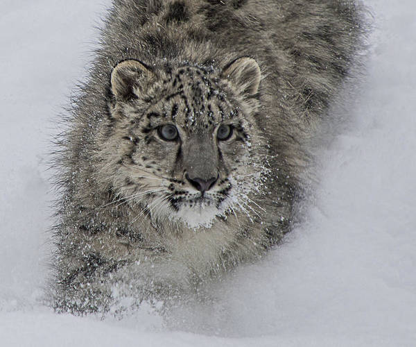 Photograph - On The Move by Teresa Wilson