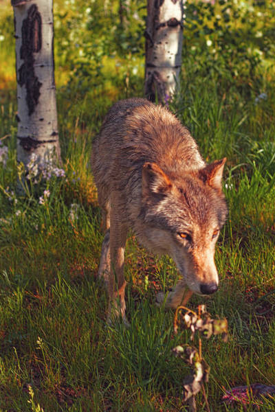 Photograph - On The Prowl  by Brian Cross