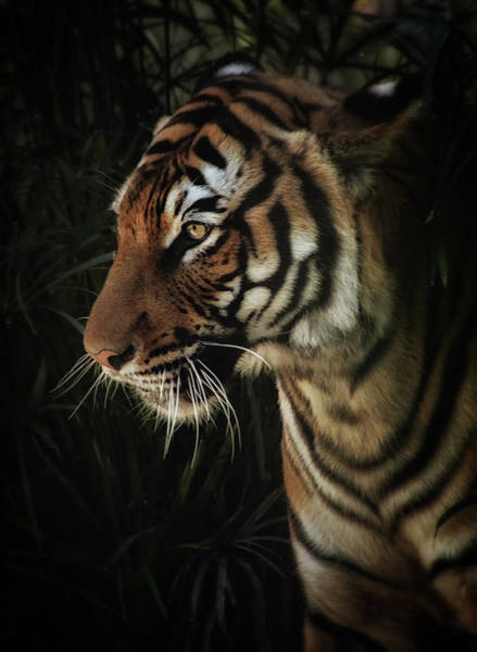 Photograph - On The Prowl by Elaine Malott