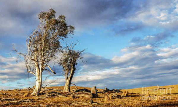 Photograph - On The Road To Cooma by Lexa Harpell