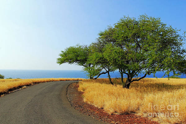 Photograph - On The Road To Lapakahi by Jennifer Robin