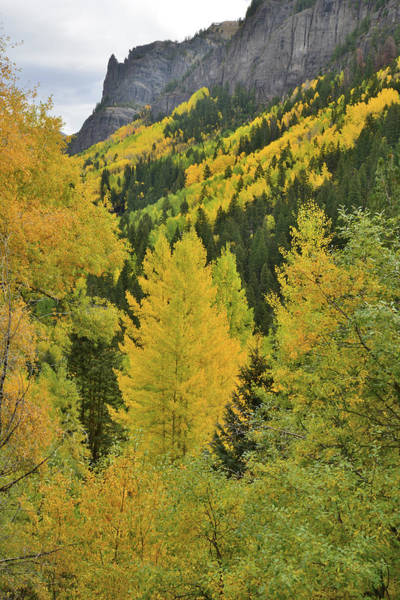 Photograph - On The Road To Yankee Boy Basin by Ray Mathis