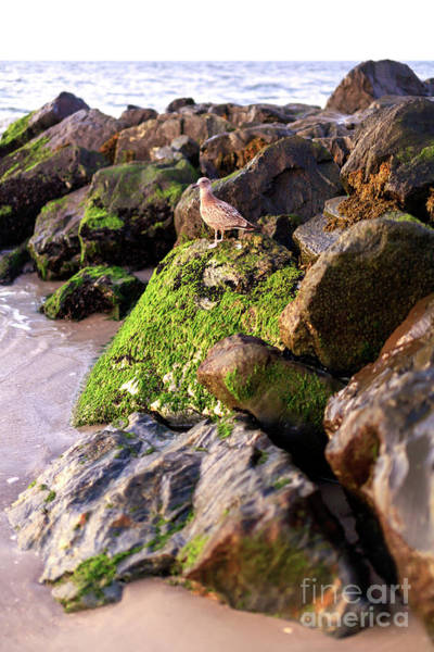 Photograph - On The Rocks In Cape May by John Rizzuto