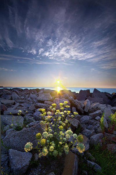 Wall Art - Photograph - On The Rocks With A Twist. by Phil Koch