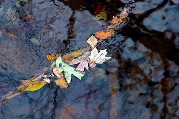 Photograph - On The Surface And Beneath 6372 Dp_2 by Steven Ward