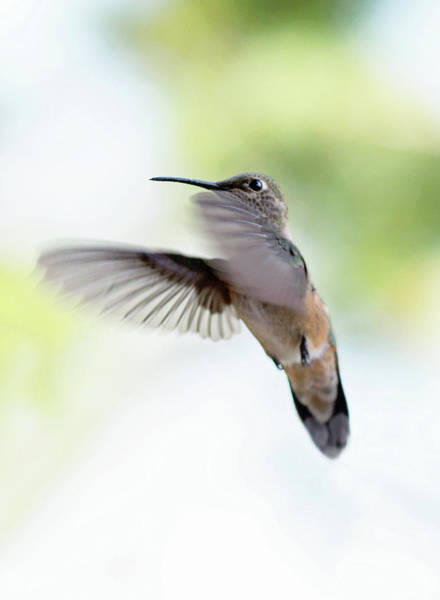 Photograph - On The Wing 2 by Sue Collura