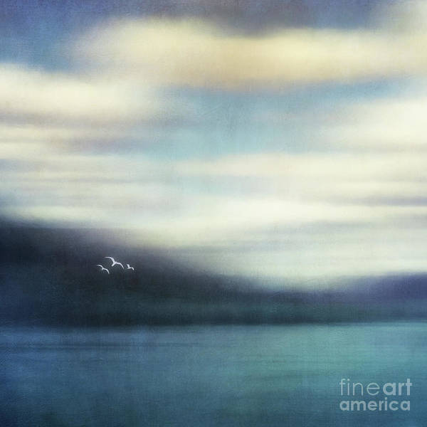Soar Photograph - On The Wing by Priska Wettstein