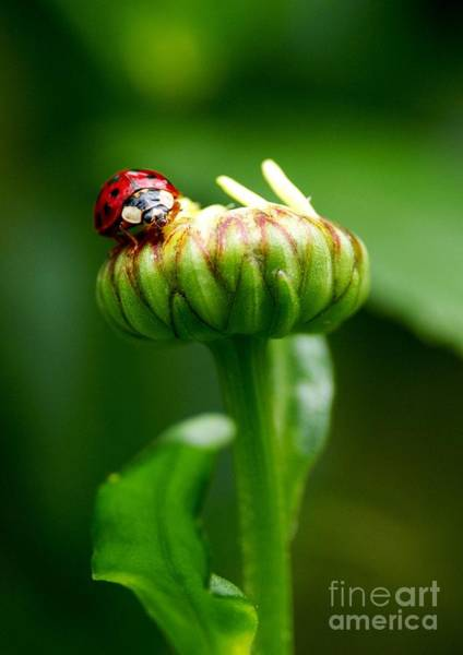 Ladybird Wall Art - Photograph - On Top Of My World by Sharon Talson