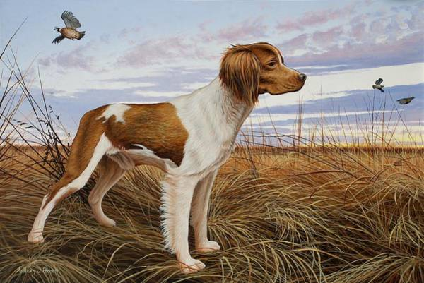 On Watch - Brittany Spaniel Art Print
