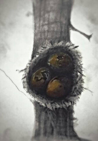 Empty Nest Wall Art - Digital Art - On Your Own by John Gasaway