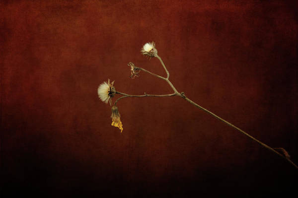 Photograph - Once Yellow by Randi Grace Nilsberg