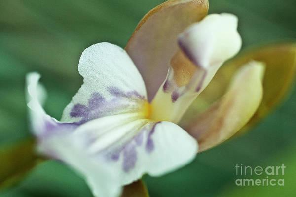 Photograph - Oncium Phalaenopsis by Heiko Koehrer-Wagner