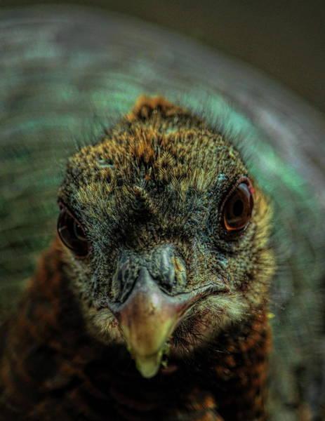 Photograph - One Beautiful Hen by Dale Kauzlaric
