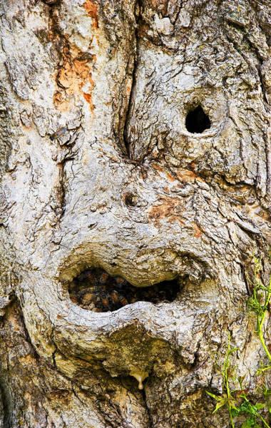 Knot Hole Photograph - One Eye Tree Face by John Bartosik