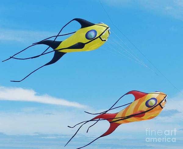 Flying A Kite Photograph - One Fish, Two Fish by Snapshot Studio