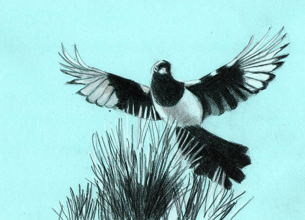 Magpies Drawing - One For Sorrow by Richard Long