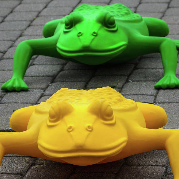 Photograph - One Frog Two Frog by Stewart Helberg