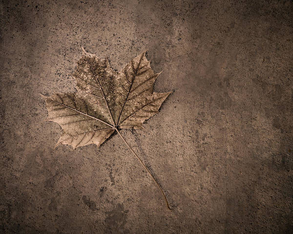 Wall Art - Photograph - One Leaf December 1st  by Scott Norris