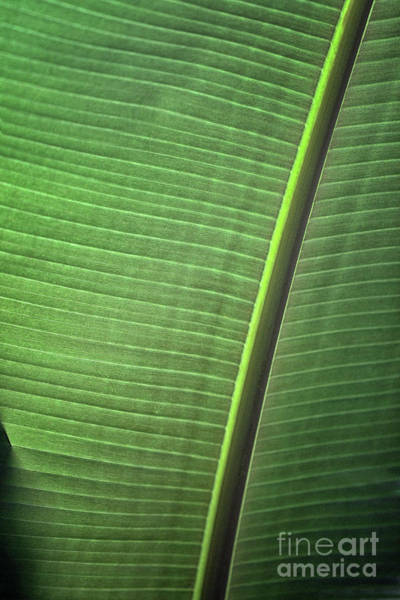 Photograph - One Leaf by Karen Adams