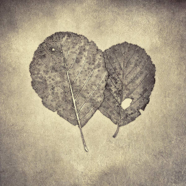 Wall Art - Photograph - One Leaf Two Leaf by Scott Norris