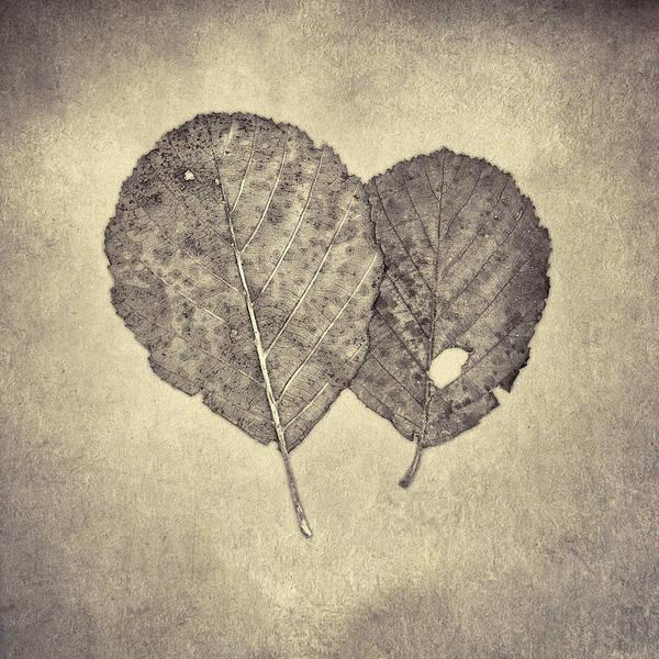 Photograph - One Leaf Two Leaf by Scott Norris
