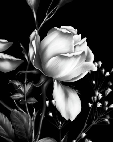 Fleur Digital Art - One Rose Bloom Black And White by Isabella Howard