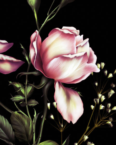 Fleur Digital Art - One Rose Bloom On Black by Isabella Howard