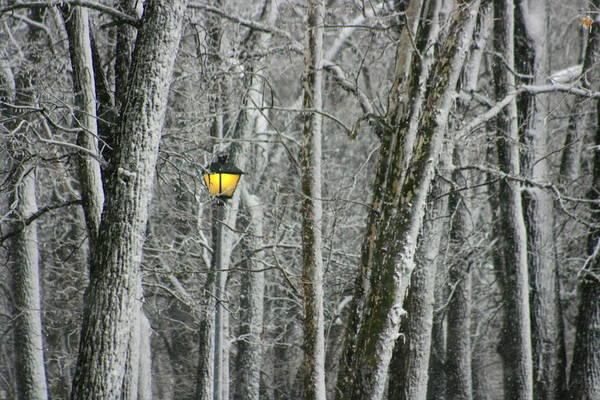 Photograph - One Strange Tree 1 by David Dunham