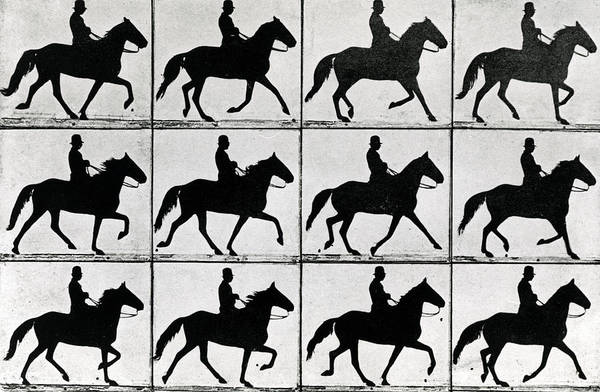 Steed Photograph - One Stride In Eleven Phases by Eadweard Muybridge