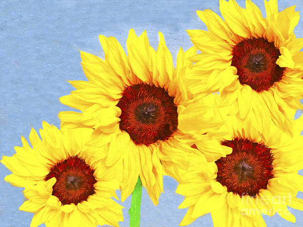 Helianthus Annuus Photograph - One Summer Day by Laura D Young