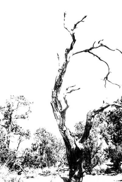 Photograph - One Tree - 0192 by G L Sarti
