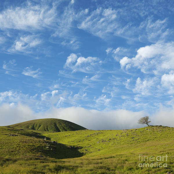 Photograph - One Tree Hill by Charmian Vistaunet