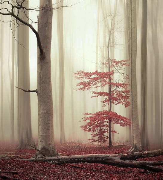 Photograph - One Tree Life - The Charming One by Rob Visser