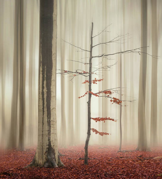 Photograph - One Tree Life - The Elegant One by Rob Visser