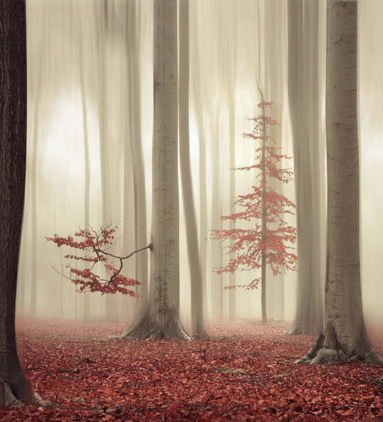 Photograph - One Tree Life - The Humble One by Rob Visser