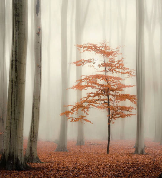 Photograph - One Tree Life - The Little One by Rob Visser