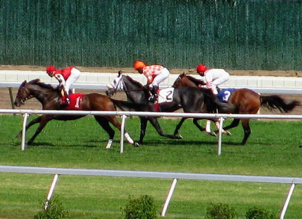Jocky Photograph - One Two Three by Colleen Kammerer