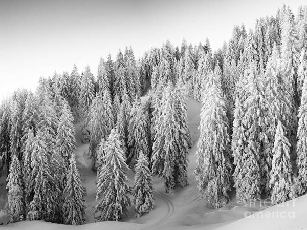 Swiss Alps Wall Art - Photograph - One Way Out by DiFigiano Photography