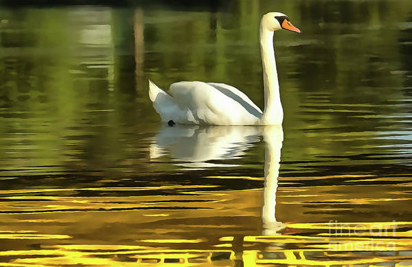 Painting - One White Swans On Lake by Odon Czintos