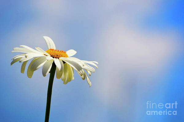 Photograph - One Wish by Traci Cottingham