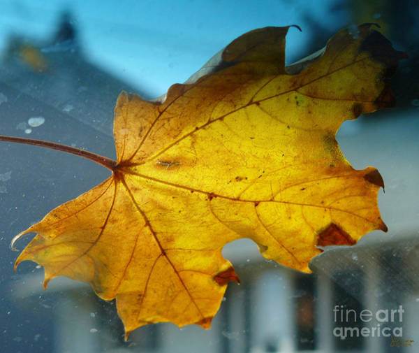 Photograph - One Yellow Leaf by Jeff Breiman