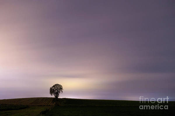 Lone Tree Wall Art - Photograph - Oneness  by Evelina Kremsdorf