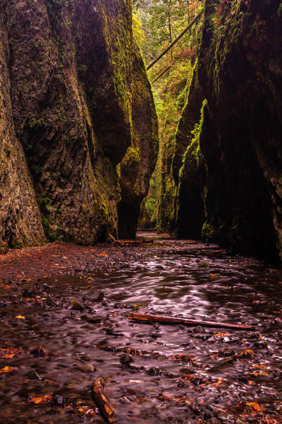 Photograph - Oneonta Gorge In Fall by Mark Kiver