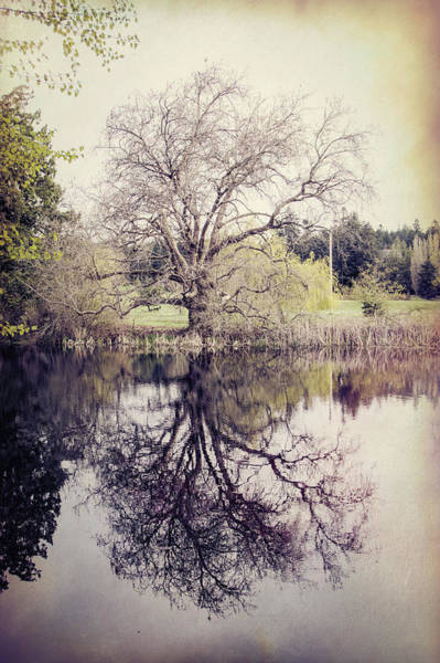 Photograph - Tree Reflections - Textured by Marilyn Wilson