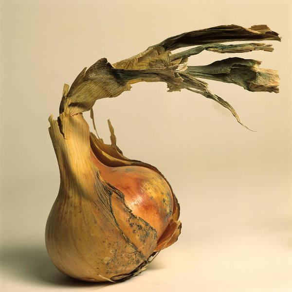 Singly Photograph - Onion by Bernard Jaubert