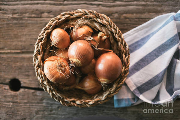 Wall Art - Photograph - Onions In Basket by Viktor Pravdica