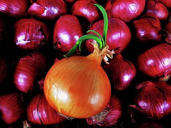 Vegies Photograph - Onions by John King