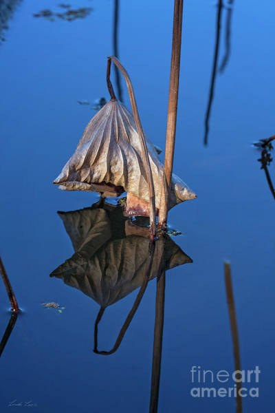 Wall Art - Photograph - Only In Still Water by Linda Lees