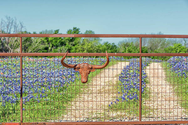 Photograph - Only In Texas by Victor Culpepper