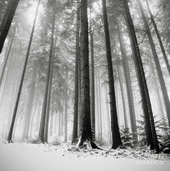 Icy Leaves Wall Art - Photograph - Only The Forests Know Why by Ronny Behnert